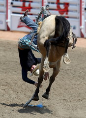 Colley of Billings, Montana gets flipped off the horse Which Rocket in the novice saddle bronc event during the Calgary Stampede rodeo in Calgary.