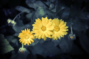 Beautiful yellow flowers growing in a garden