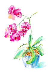 Purple orchid in a pot. Watercolor hand drawn illustration.Exotic flowers on a white background.
