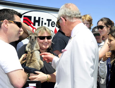 Britain's Prince Charles pets a joey kangaroo as he greets participants at the Albany Agricultural Fair in Western Australia