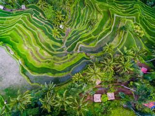 Taras ryż dron