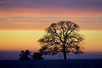 Silhouette of a tall tree with bands of colorful cloud in the background during sunset