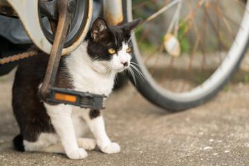 自転車の下に隠れて警戒する猫