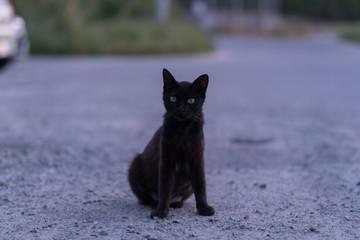 こちらを見つめて座る黒猫