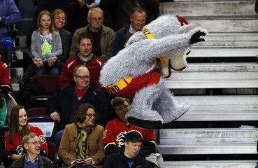Harvey the Hound, the Calgary Flames mascot, jumps over a fan's head during the third period of their NHL hockey game against the Phoenix Coyotes in Calgary