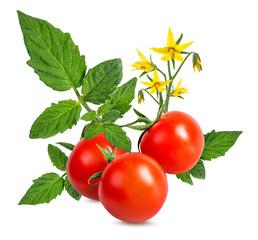 Fototapete - tomato isolated on white