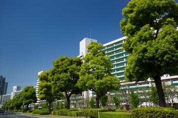 新緑のマンション街