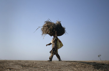 A woman carries sugarcane leaves on her head to be used as animal feed, as she walks through a field in Faisalabad
