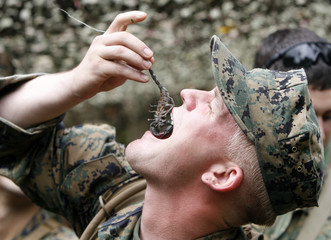 A U.S. Marine eats a scorpion during a jungle survival exercise with the Thai Navy at a military base in Chon Buri Province