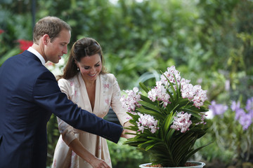 Britain's Prince William and Catherine, the Duchess of Cambridge, look at orchid hybrids named in their honour at the National Orchid Garden in the Singapore Botanic Gardens
