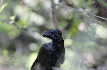 A bird covered in spilled oil perches on the banks of the San Juan river in Cadereyta