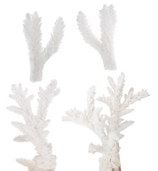 four white isolated coral small branches