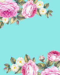 Watercolor illustration of rose flower.
