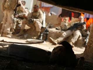 A chicken and her chick sit in the shade while U.S. Marines rest while other Marines conduct searches in a residential compound during a patrol around the area of Karez-e-Sayyidi