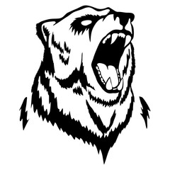Isolated illustration of a bear's head