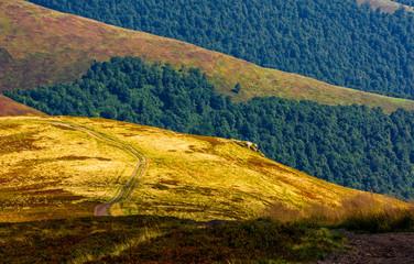 path through the mountain hill in summer