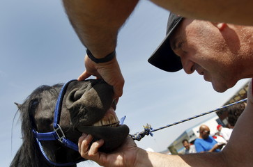 A man examines a horse's mouth during a horse trading fair on the second day of the San Fermin festival in Pamplona