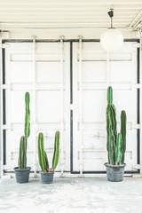 cactus in vase decoration