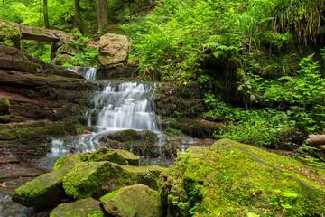 Wald mit Bach Natur Wasser