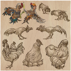 Poultry - An hand drawn vector pack. Freehand sketching.