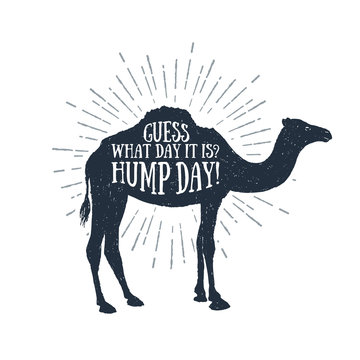 "Hand drawn label with textured camel vector illustration and ""Guess what day it is? Hump day!"" funny lettering."