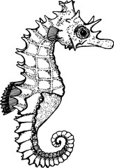 Black and white illustration of a sea animal. Figure seahorse.
