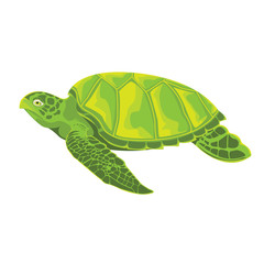 TURTLE.illustration vector.