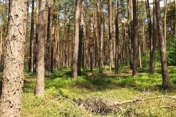 Wald im Schatten