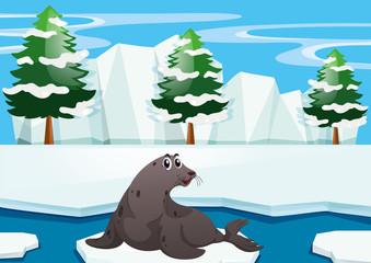 Seal sitting on iceberg