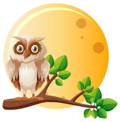 Owl on the branch on fullmoon night