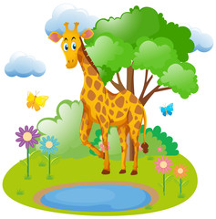 Giraffe living in the forest