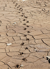 Footprints of a capybara are seen on the cracked grounds of the Jaguari dam, part of the Cantareira water supply system, in Joanopollis