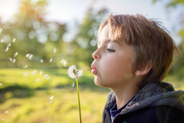 Dandelion wishes of a child