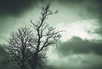 Dark tree before the storm