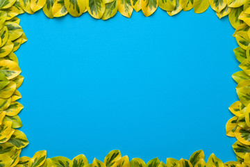 Leaves Frame on Blue Background