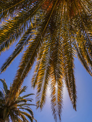 Beach  concept. Am image of palm tree and shining sun over bright sky.