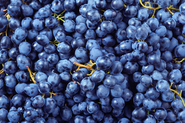 Fototapete - Fresh ripe grape. Food background. Dark grape. Blue grape. Wine grape.