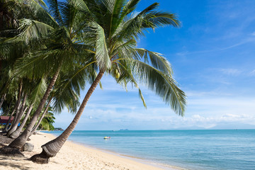 Tropical sand beach with coconut trees at the morning. Thailand, Samui island, Maenam.