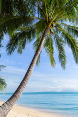 Tropical sand beach with coconut trees at the morning. Thailand, Samui island.