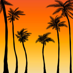 summer palm trees sunset background