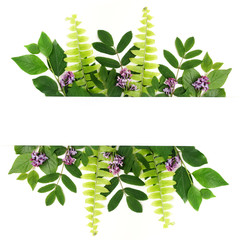 Fresh green leaves borderon white. Flat lay. Top view.