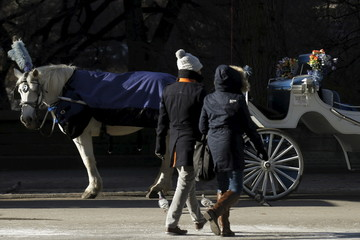 A horse carriage is parked near Central Park in the Manhattan borough of New York