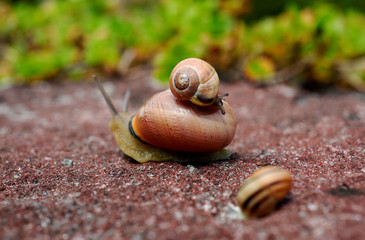 Snails are photographed in the park around Wolfsgarten (wolves' garden) castle of the Earl of Hesse in Langen near Frankfurt