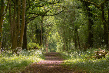 Path through British ancient woodland with dappled sunlight. Flowers line ride in springtime in Lower Woods, Gloucestershire, UK Fototapete