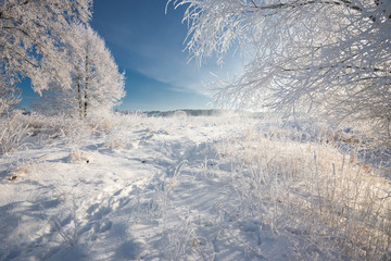 Russian Winter. Morning Frosty Winter Landscape With Dazzling White Snow And Hoarfrost, Trees And A Saturated Blue Sky. Field With Traces  On A Sunny Day. Reed, Grass And Trees Are Covered With Frost.