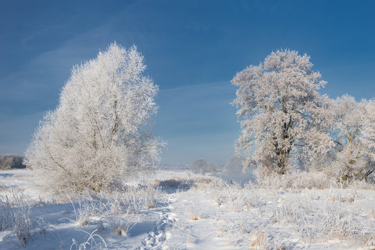Morning Frosty Winter Landscape With Dazzling White Snow And Hoarfrost, River And A Saturated Blue Sky.Winter Small River On A Sunny Day. A Real Russian Winter.Frost frost on the trees. Sunny day