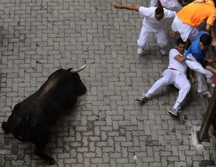 A Fuente Ymbro fighting bull falls over near runners during the third running of the bulls on the fourth day of the San Fermin festival in Pamplona.