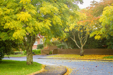 golden autumn trees, outdoor landscape fall image