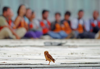 An owl perches in front of Greenpeace activists who were arrested in Brasilia