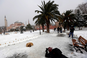 A man takes pictures of a stray dog, with the Byzantine-era monument of St. Sophia in the background, at the snow-covered Sultanahmet square in Istanbul